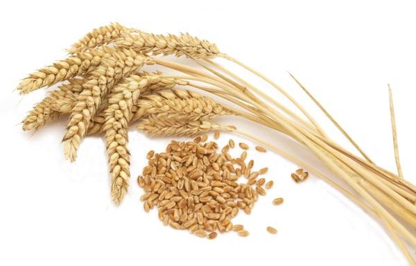 Пшеничный протеин 2