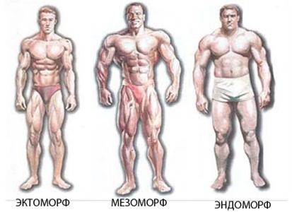 Виды телосложения человека