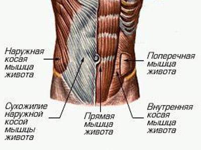 Анатомия пресса
