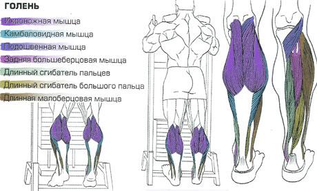 Подъём на носки стоя в тренажёре