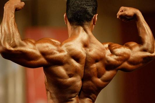Тренировка мышц спины как умно составить программу