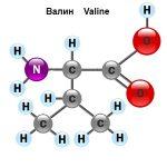 Аминокислота Валин: в чём польза?