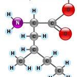 Аминокислота Изолейцин: польза и свойства