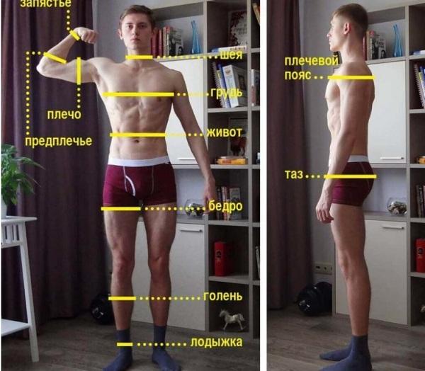 Объем бицепса: как правильно измерить