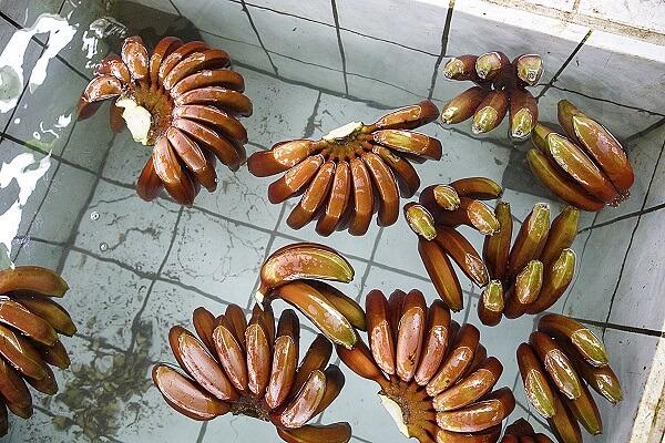 Красные бананы – отличие от желтых
