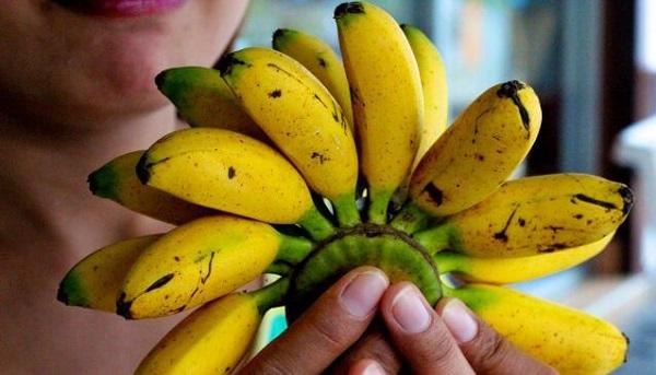 Бананы мини чем отличаются от обычных