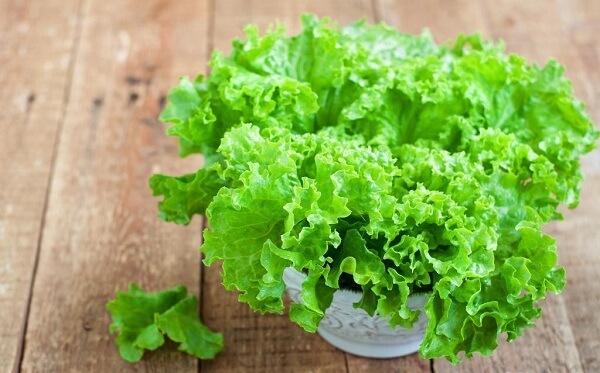 Польза листового салата